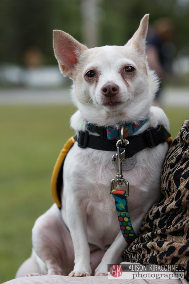 Homeless dog portrait