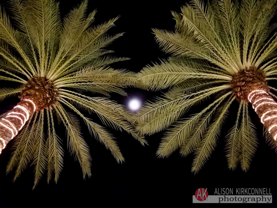 Moon framed by palm trees