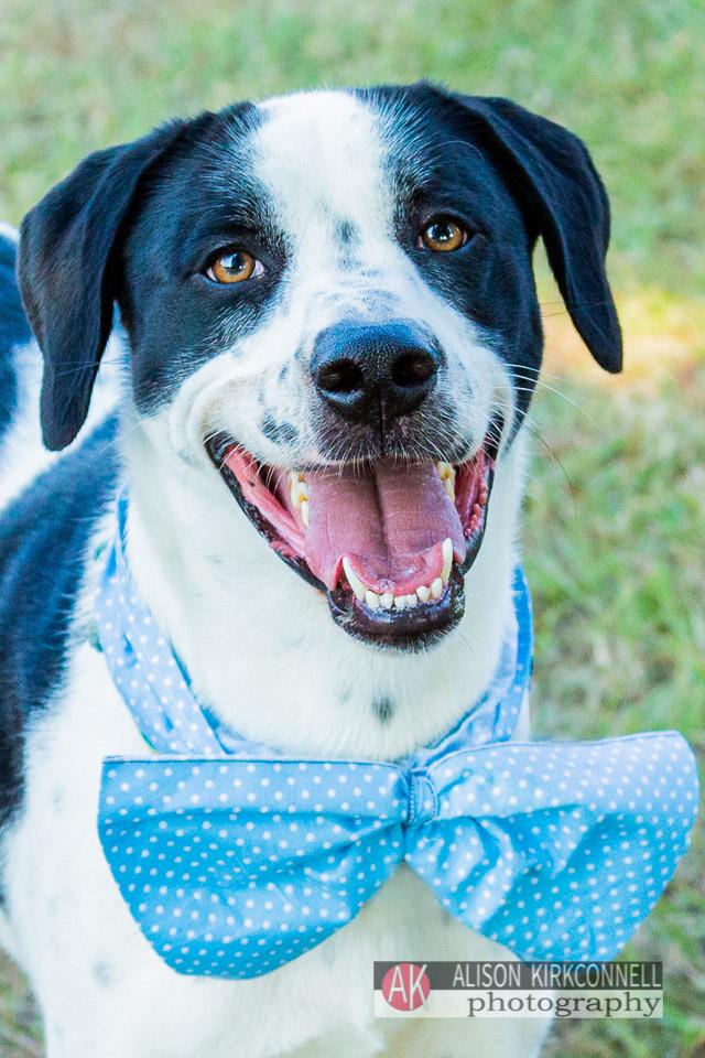 Shelter dog- large mixed breed