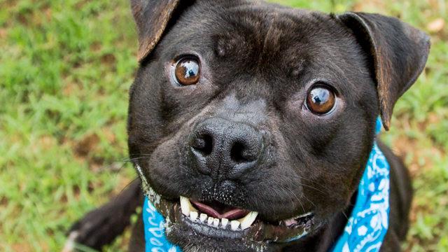 shelter-dog-portrait-day30-e1582560671902.jpg